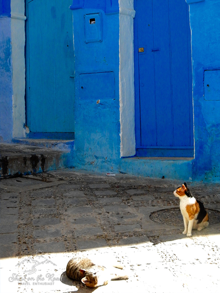 Cats-of-morocco_2