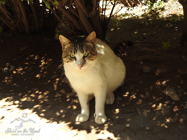 Cats-of-morocco_3