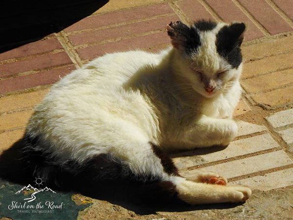 Cats-of-morocco_4